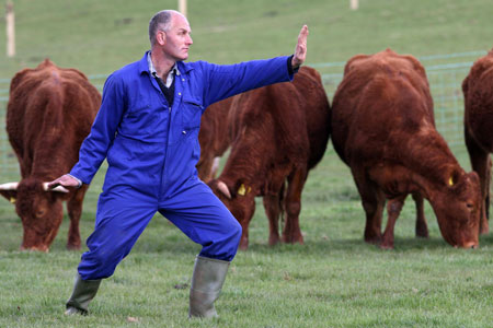 https://leaderswedeserve.files.wordpress.com/2008/04/tai-chi-happy-cows.jpg