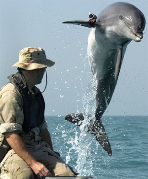Dolphin training for defense duties